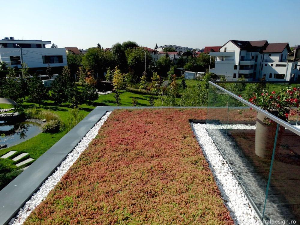 Fotografii cu un acoperis de sedum amenajat in Bucuresti