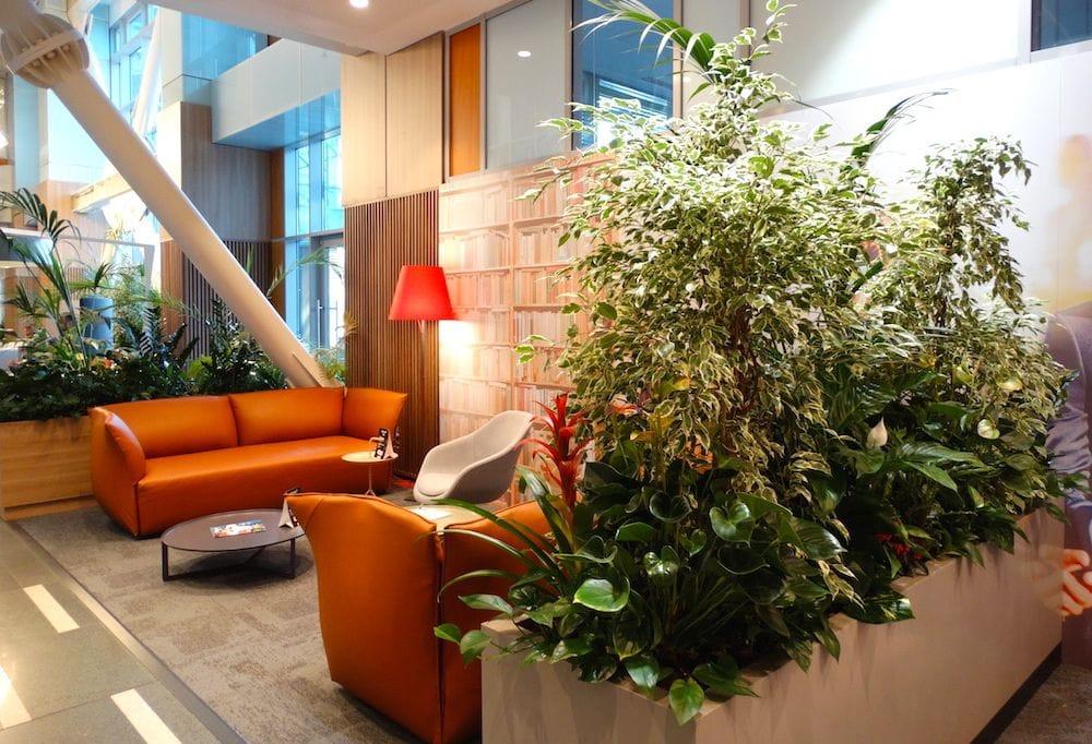 Jardiniere cu plante de interior intr-o cladire de birouri