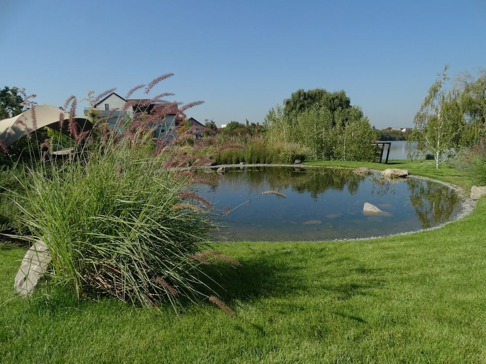 Amestec de ierburi ornamentale langa lacul artificial