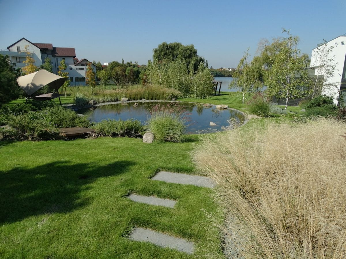 Ierburi ornamentale langa lacul artificial