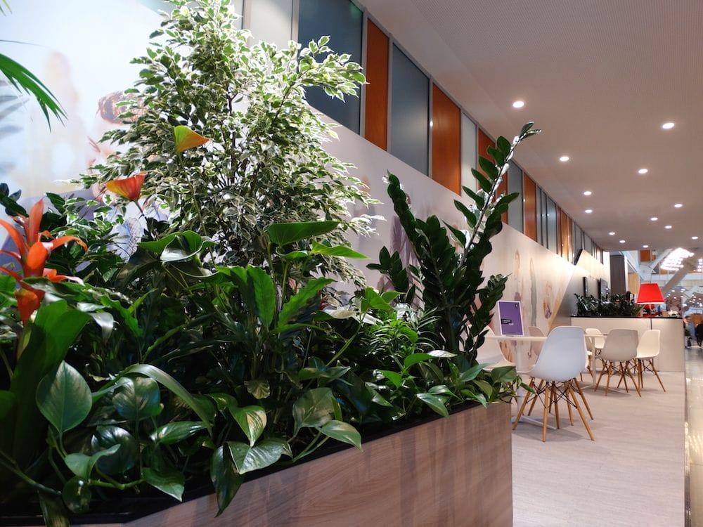 O jardiniera cu plante de interior, perfecta pentru a delimita spatiile