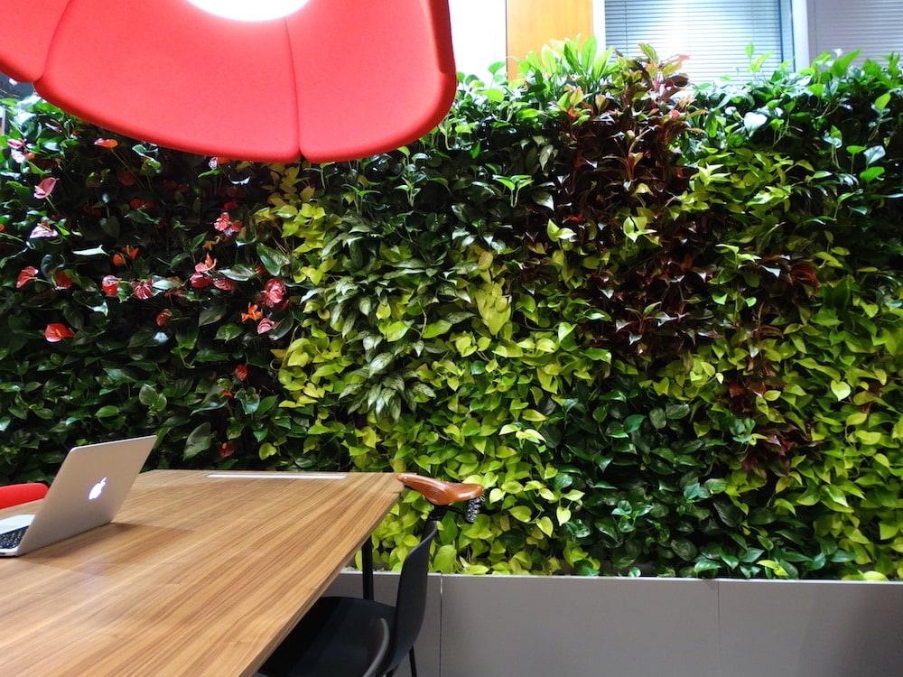 Peretele verde de la intrarea in birou