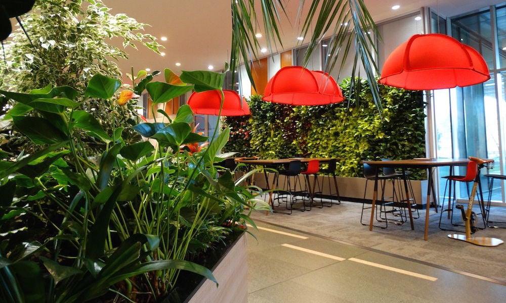 Firma noastra amenajaza gradini interioare, jardiniere cu plante si pereti verzi