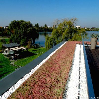 Amenajam terase si acoperusiri de sedum in Bucuresti